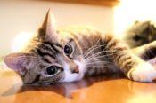 板東寛司(写真家)は招き猫の専門家 Wiki風プロフィール 猫写真の著書や経歴 出身大学はどこ?