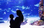 DMMかりゆし水族館への行き方(アクセス)・場所と地図は?入園料金や見どころも気になる!